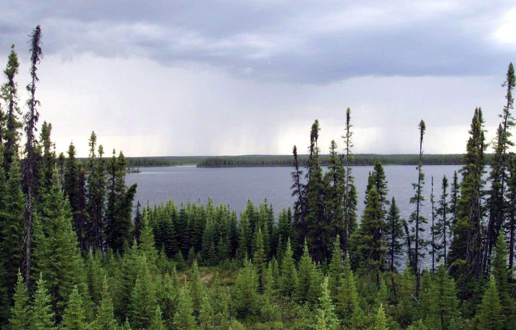 Le Canada abrite 20% des forêts intactes et 24% des milieux humides de la planète, et pourtant, il n'en protège qu'un peu plus de 10%.