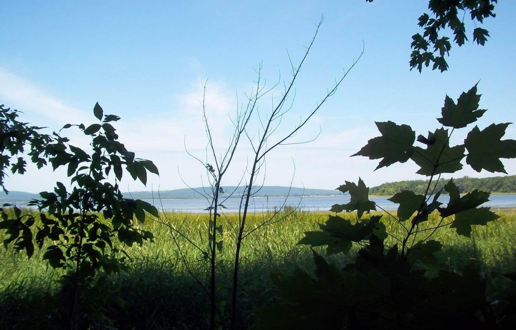 Le projet immobilier dans Pierrefonds-Ouestpourrait faire disparaître d'anciennes terres agricoles d'une grande valeur écologique.