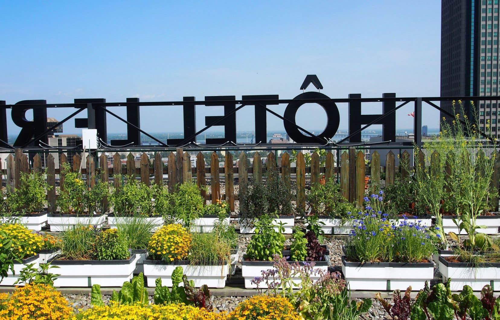 Pour répondre à l'objectif de réduire l'impact sur l'environnement de la chaîne des Hôtels Fairmont, l'hôtel Reine Elizabeth a choisi la production de légumes sur le toit.