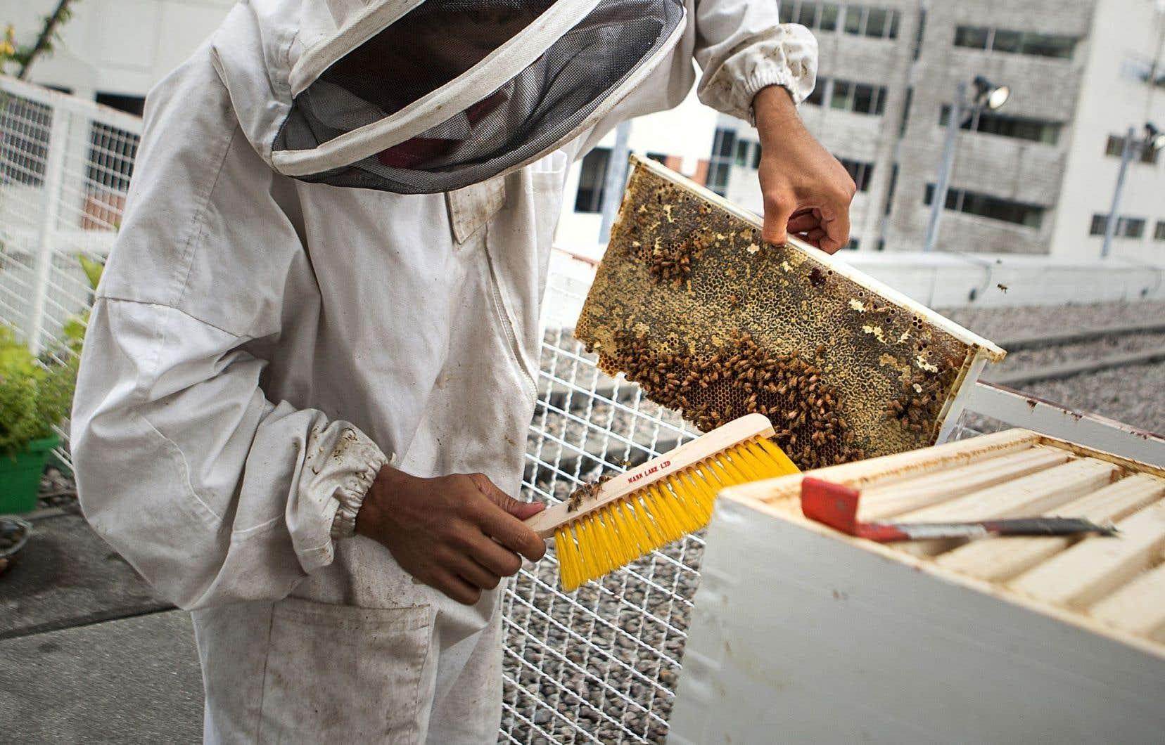 Les abeilles souffrent de l'usage des insecticides de la classe des néonicotinoïdes. Il faut donc adopter une stratégie rationnelle et rigoureuse pour son utilisation.
