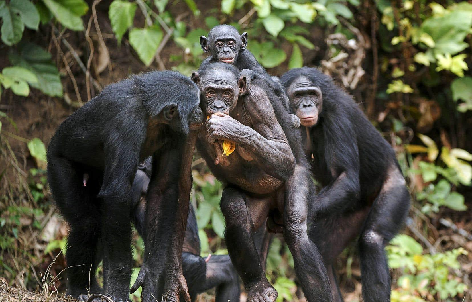 Le Néerlandais Frans de Waal affirme, dans «Le bonobo, Dieu et nous», que «la morale vient d'en bas», qu'elle «est plus ancienne que la religion» et que notre humanité «nous est inhérente».
