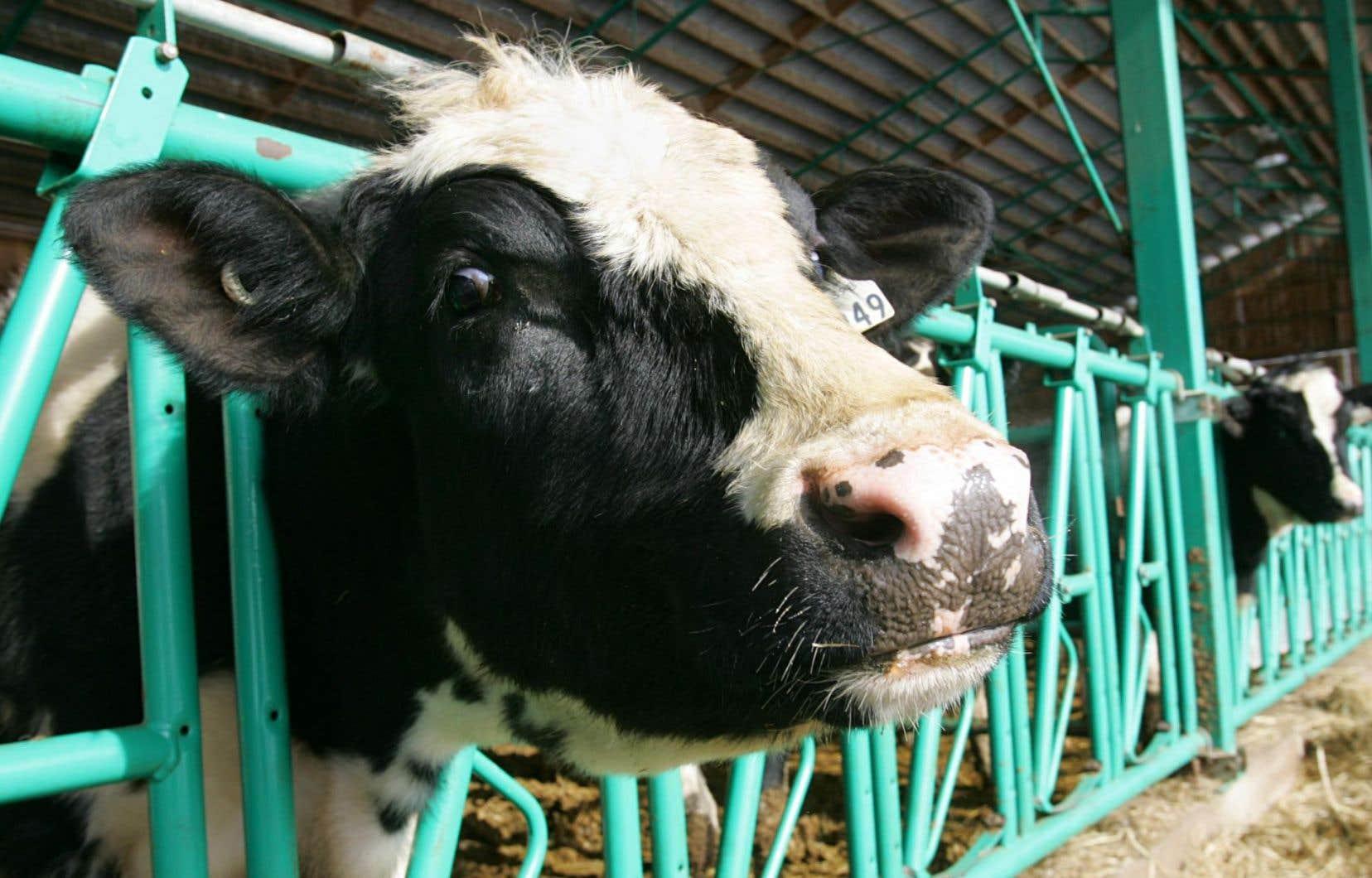 Les producteurs de lait, d'oeufs et de volaille craignent d'être sacrifiés sur l'autel du libre-échange.<br />