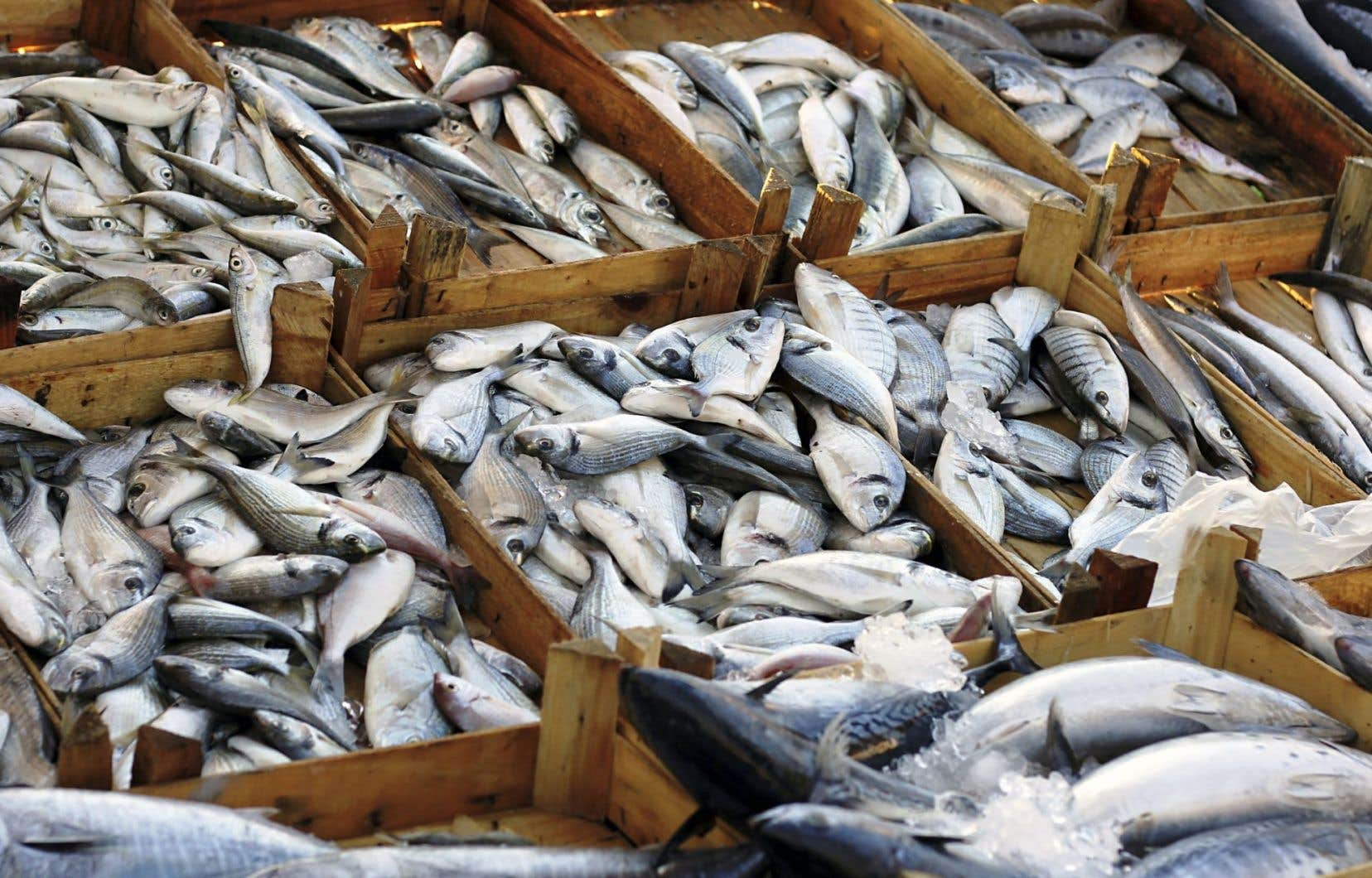 Les chercheurs ont évalué que la quantité de produits de la mer qui aboutissent à la poubelle fournirait assez de protéines pour nourrir jusqu'à 12millions d'êtres humains.