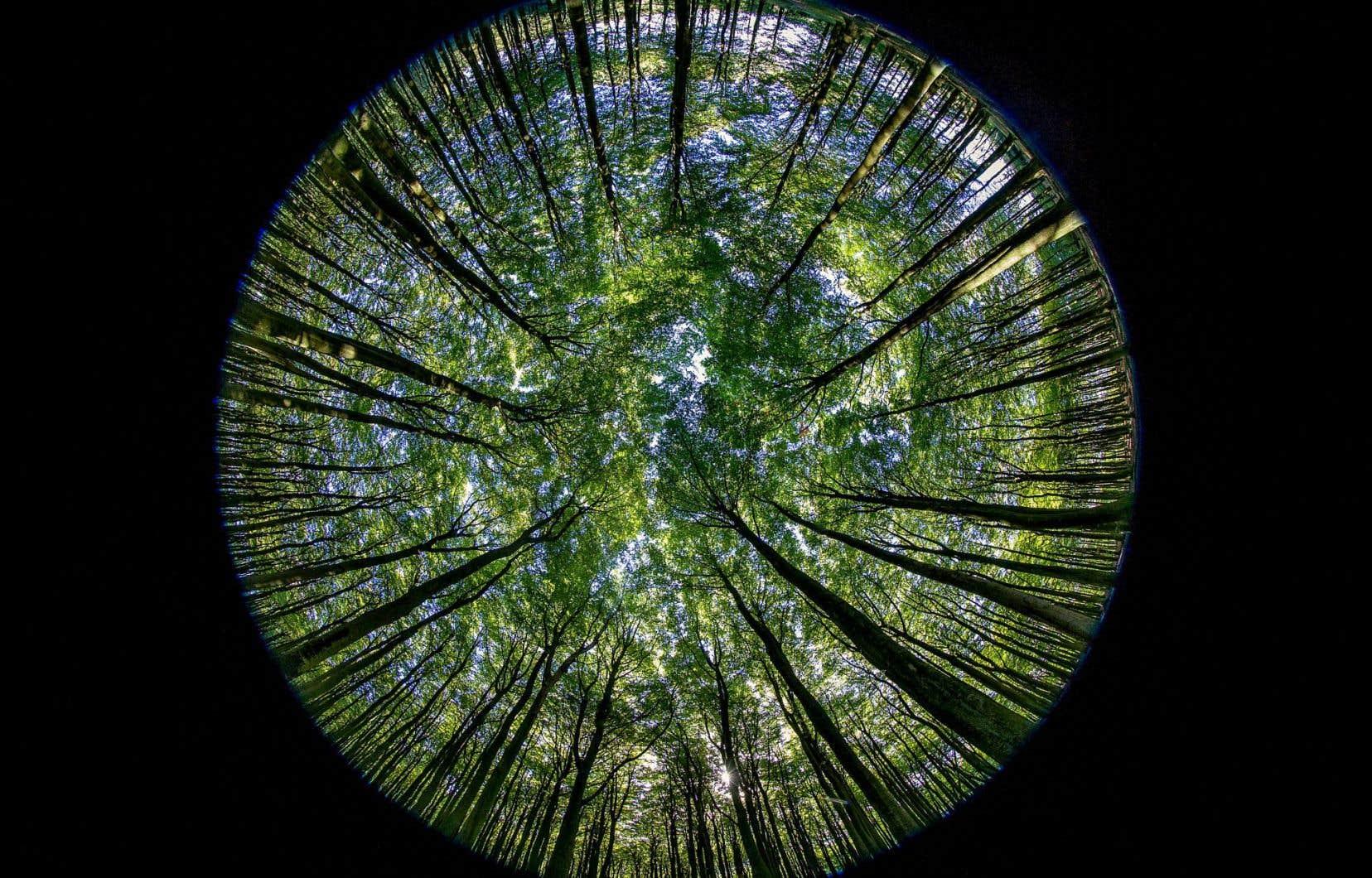 Photographie d'une forêt de hêtres en Allemagne, réalisée avec un objectif à très grand angle