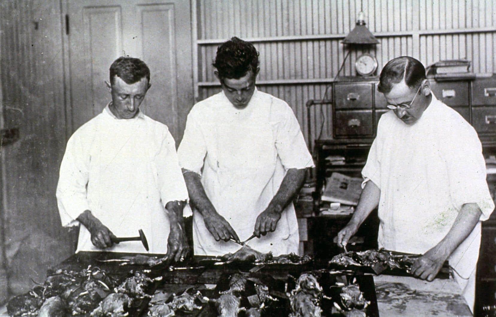 À La Nouvelle-Orléans, en 1914, trois scientifiques dissèquent des rats. La peste a proliféré aux États-Unis en raison de différents petits animaux. Si la maladie est encore présente au sud de la frontière, elle est rarissime au Canada, où le dernier cas recensé date de 1939.