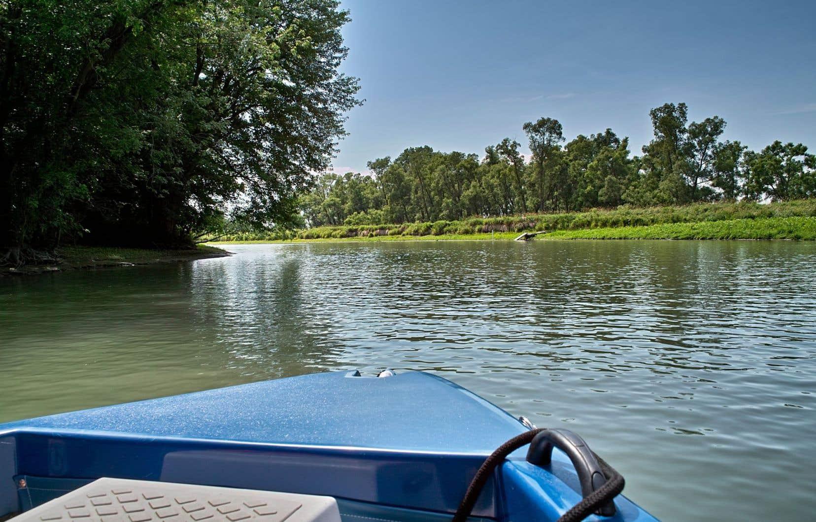 «C'est près de la réalité de dire que le lac Saint-Pierre joue le rôle de zone de traitement tertiaire des rejets de Montréal», selon le professeur Gilbert Cabana.