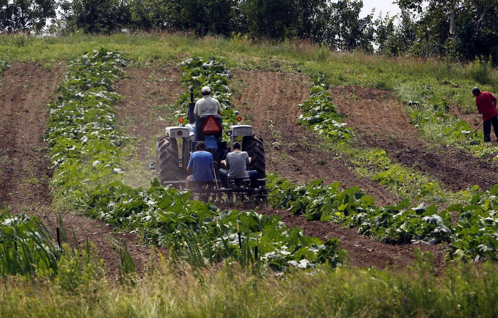 Le Québec ne manque pas de ressources en agroalimentaire, mais souvent, c'est le manque de constance et de rigueur qui prévaut.