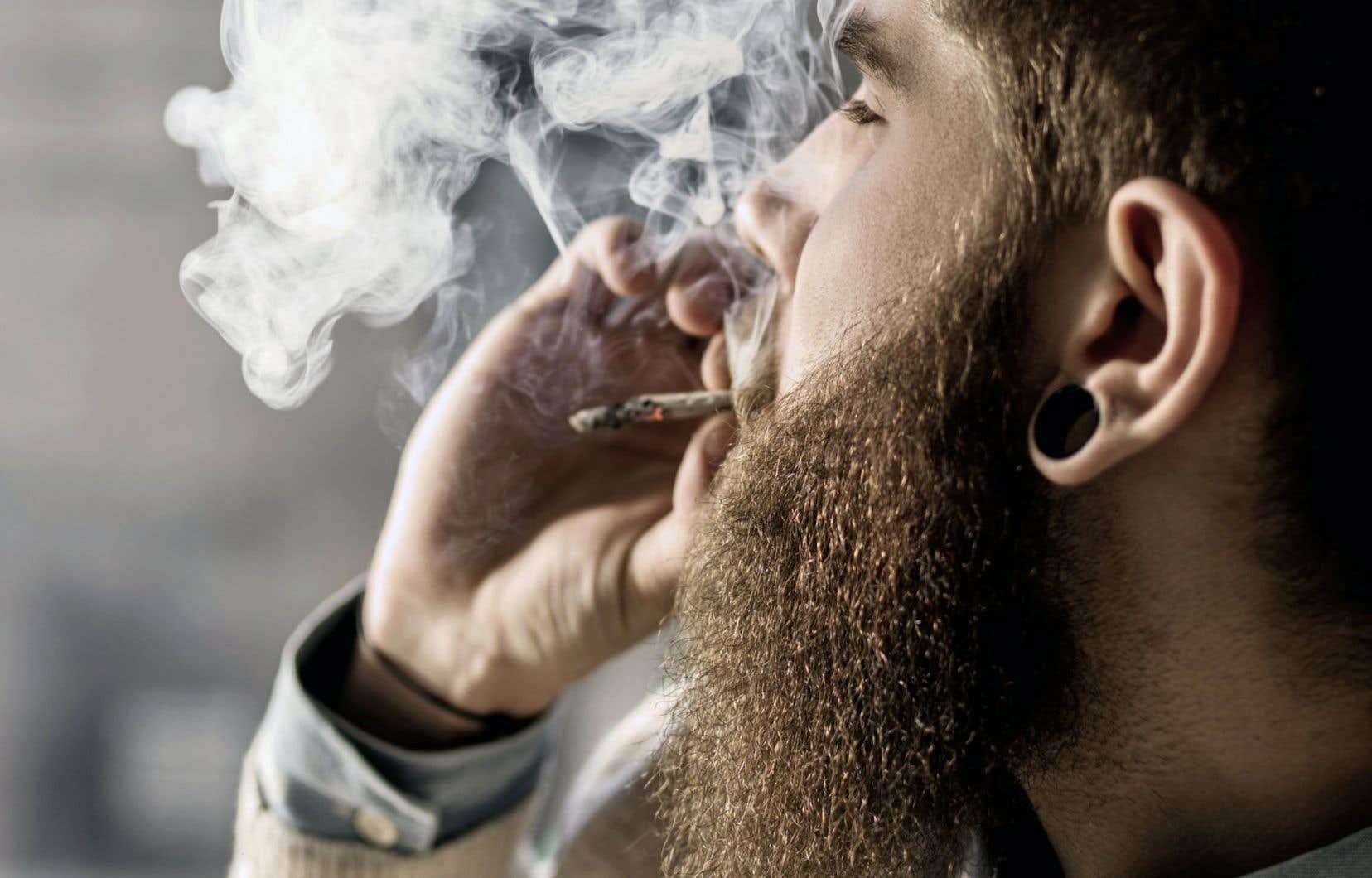 Les statistiques de 2013 révèlent que 11 % de la population âgée de 15 ans et plus ont consommé de la marijuana au cours de l'année précédente.