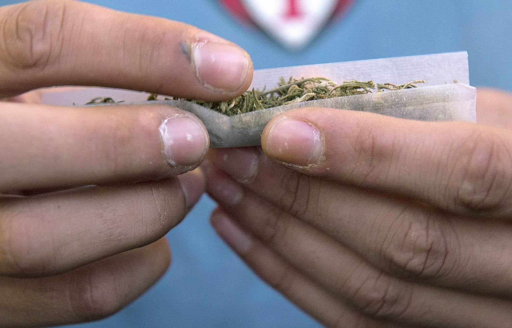 «Les jeunes qui consomment du cannabis régulièrement sont plus susceptibles d'abandonner l'école», rappelle le chercheur Tomas Paus.