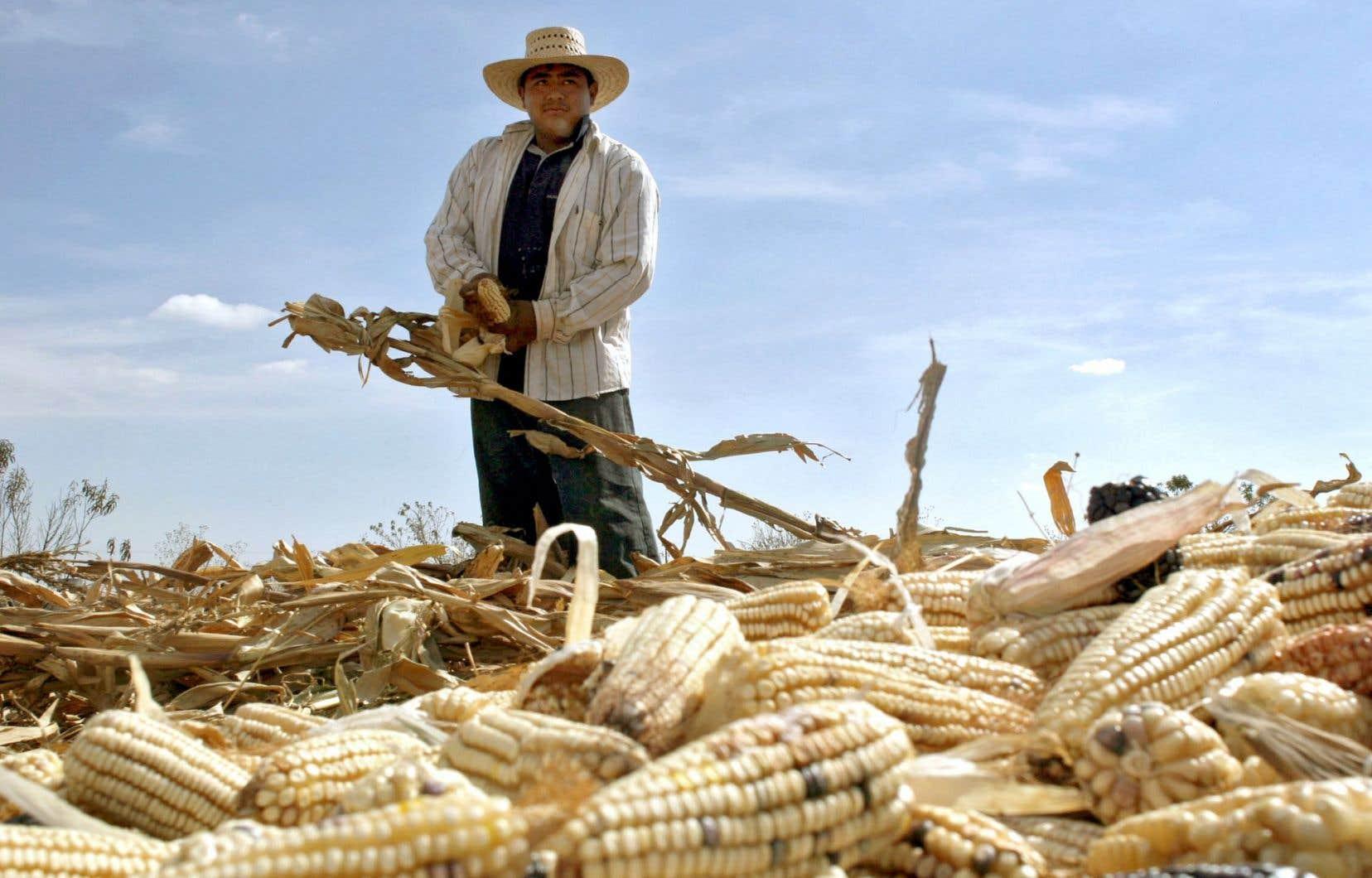 Le Mexique a maintenant une balance commerciale positive, mais il importe davantage de produits de base, comme le maïs.