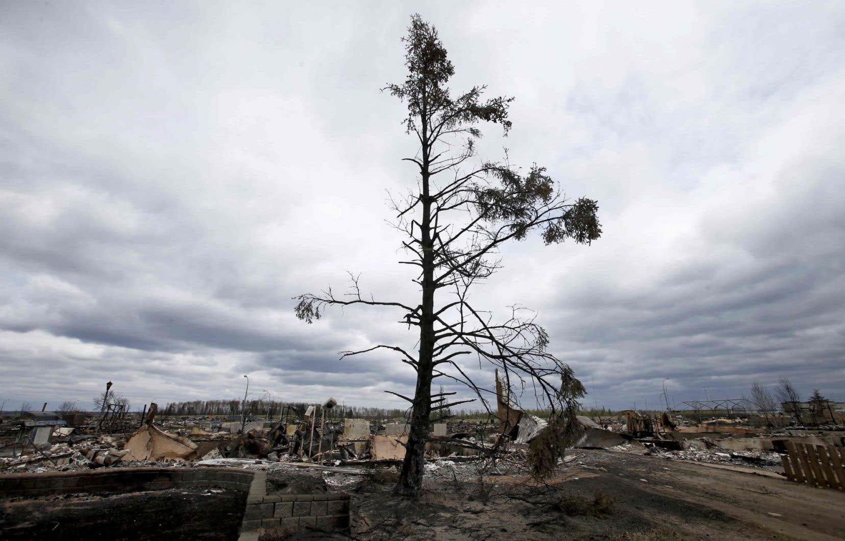 Un arbre à moitié rescapé et totalement esseulé dans un quartier de Fort McMurray, en Alberta