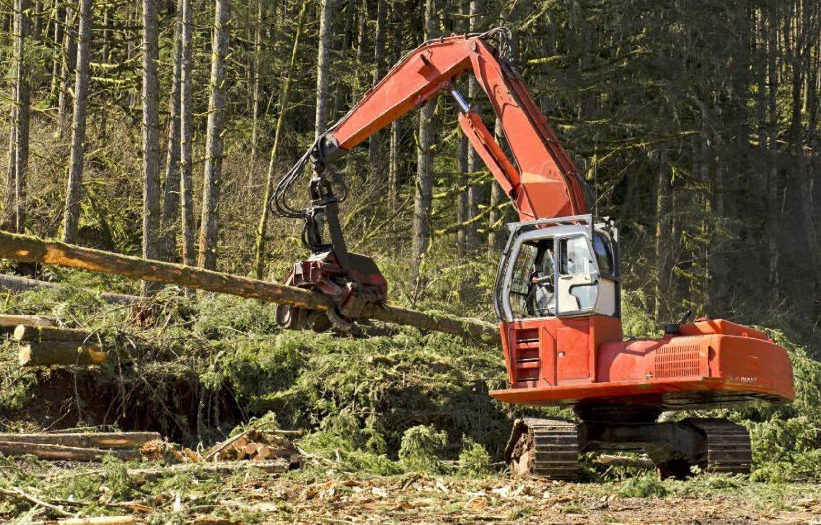 Selon Greenpeace, plusieurs paysages forestiers dans le secteur des montagnes Blanches auraient été perdus ou dégradés au cours des dernières années.