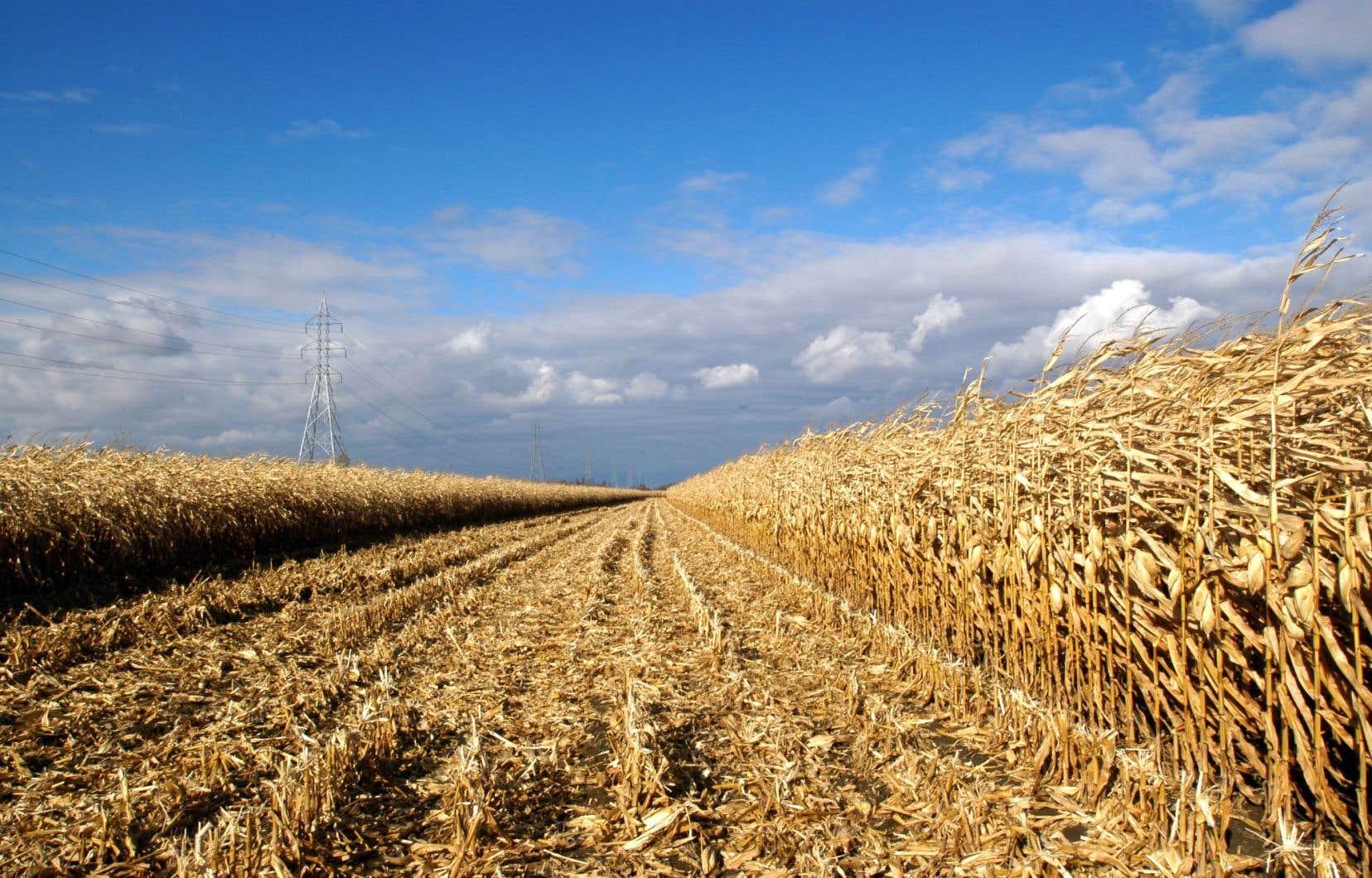 La quasi-totalité des semences de maïs et environ la moitié des semences de soya sont traitées avec des néonicotinoïdes .