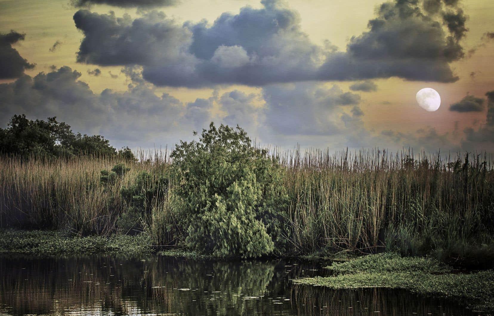 La Louisiane, le bayou, un antihéros qui sillonne la baie de Barateria à la poursuite des chevrettes... L'écriture de Tom Cooper traduit à merveille les ambiances lourdes et embrumées.