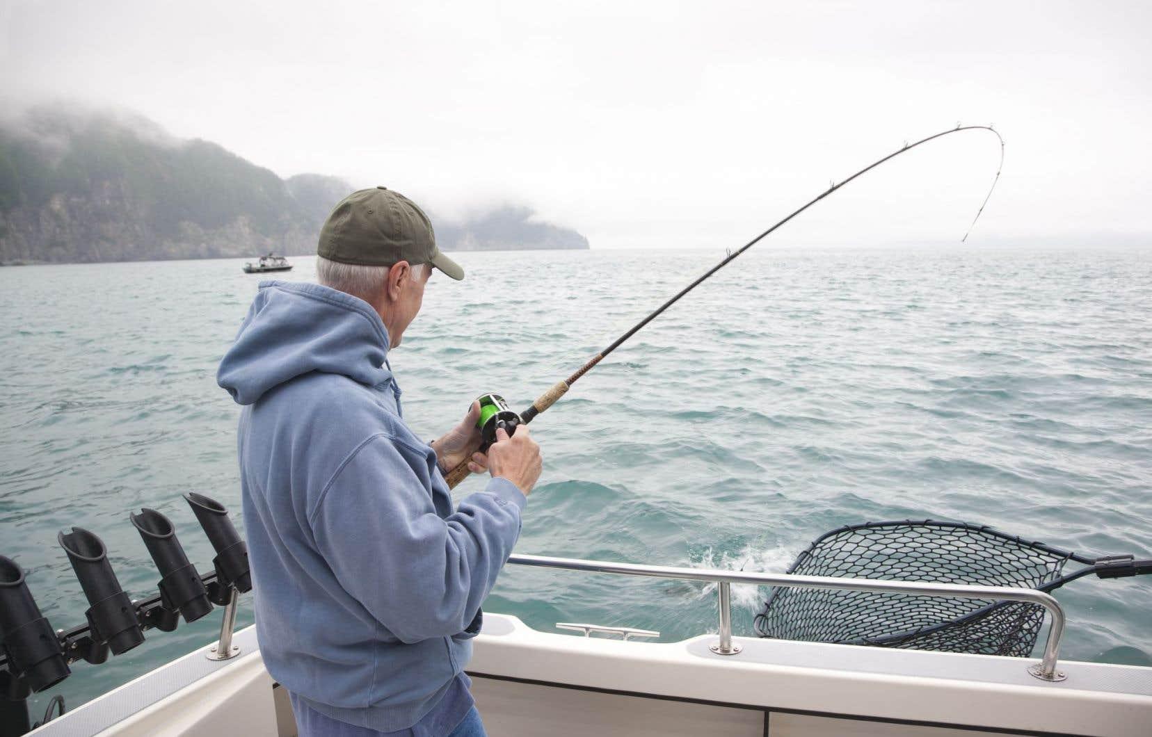 La Loi sur les pêches ne protège plus que les poissons faisant l'objet de pêche récréative, commerciale et autochtone, ou ceux dont se nourrissent ces derniers.
