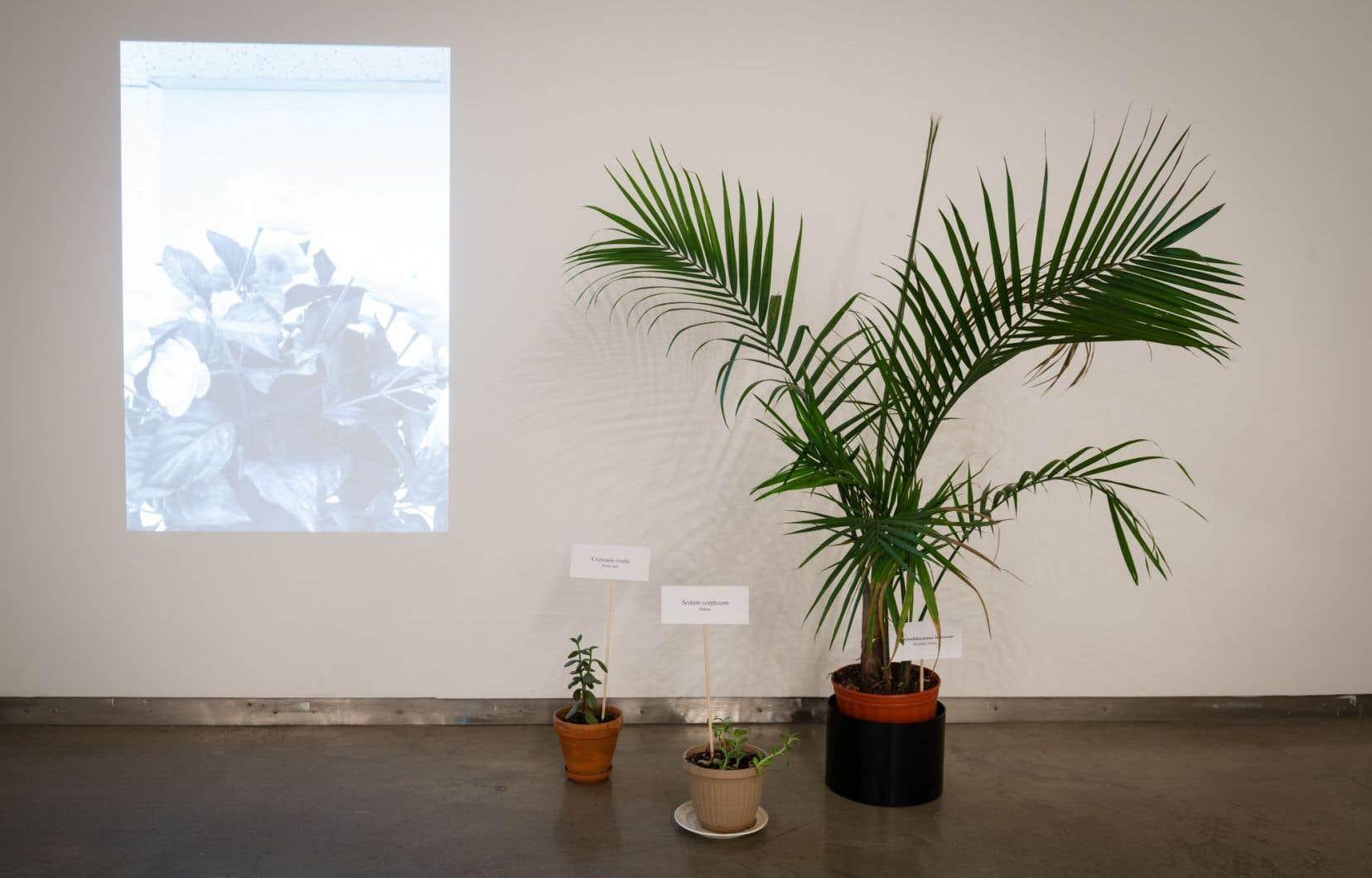 Catherine Lescarbeau mène depuis quelque temps un projet autour des plantes d'intérieur.