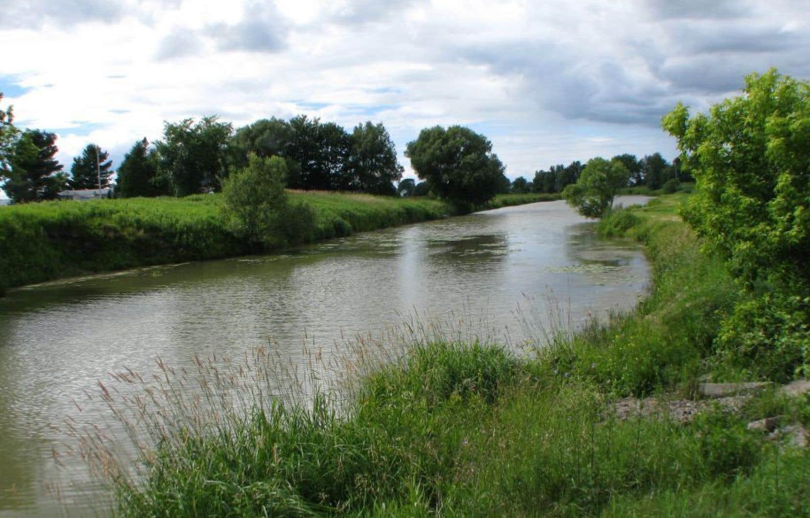 Des citoyens ont alerté les autorités jeudi quand ils ont remarqué des centaines de poissons qui flottaient à la surface de la rivière Yamaska.