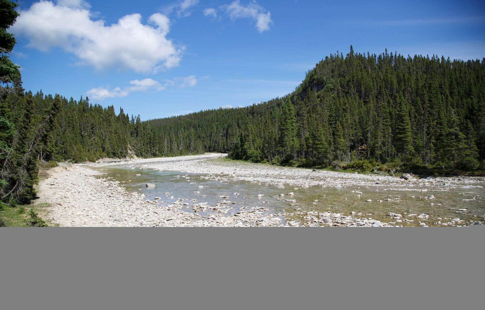 La rivière Sainte-Marie, sur l'île d'Anticosti, abrite des saumons de l'Atlantique.