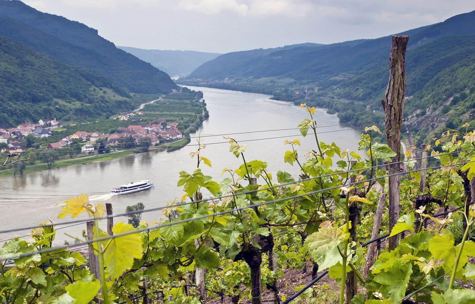 Vignoble installé aux abords du Danube, en Autriche