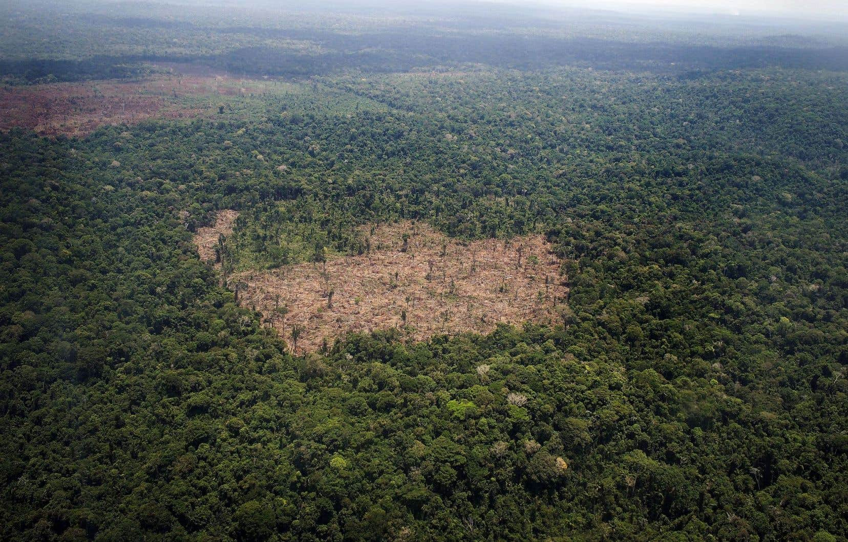 Vue d'une zone de déforestation au centre de la jungle amazonienne
