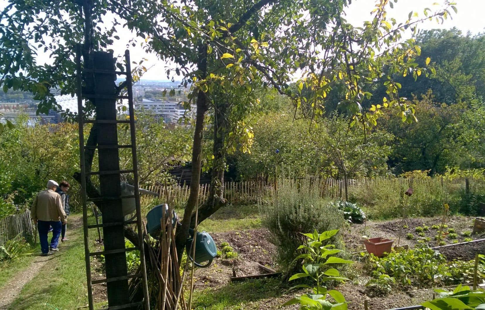 Les jardins de Fontanières, véritable lieu de nature en ville, sont implantés sur la balme de la Saône en surplomb du quartier de la Confluence.