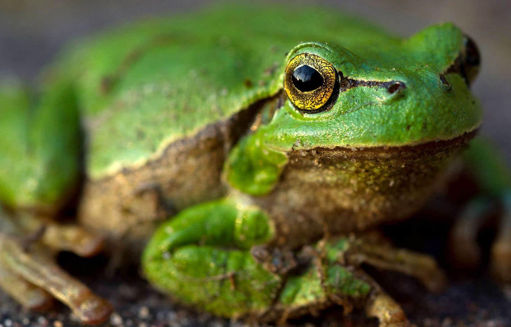 Al Gore manie l'allégorie de la grenouille pour parler de notre indifférence au changement climatique.