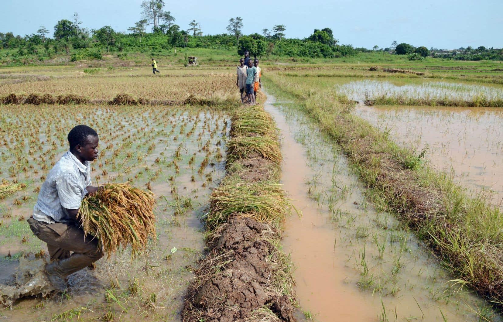 «Si, dans les pays industrialisés, l'agriculture représente environ 2% du PIB, ce chiffre est plutôt de 5 à 10% pour les pays émergents et grimpe jusqu'entre 25 et 45% pour les pays en développement. De plus, dans les pays en développement, entre 40 et 60% de la main-d'œuvre nationale se trouve dans le secteur agricole», assure André Beaudoin, de UPA Développement international (UPADI).