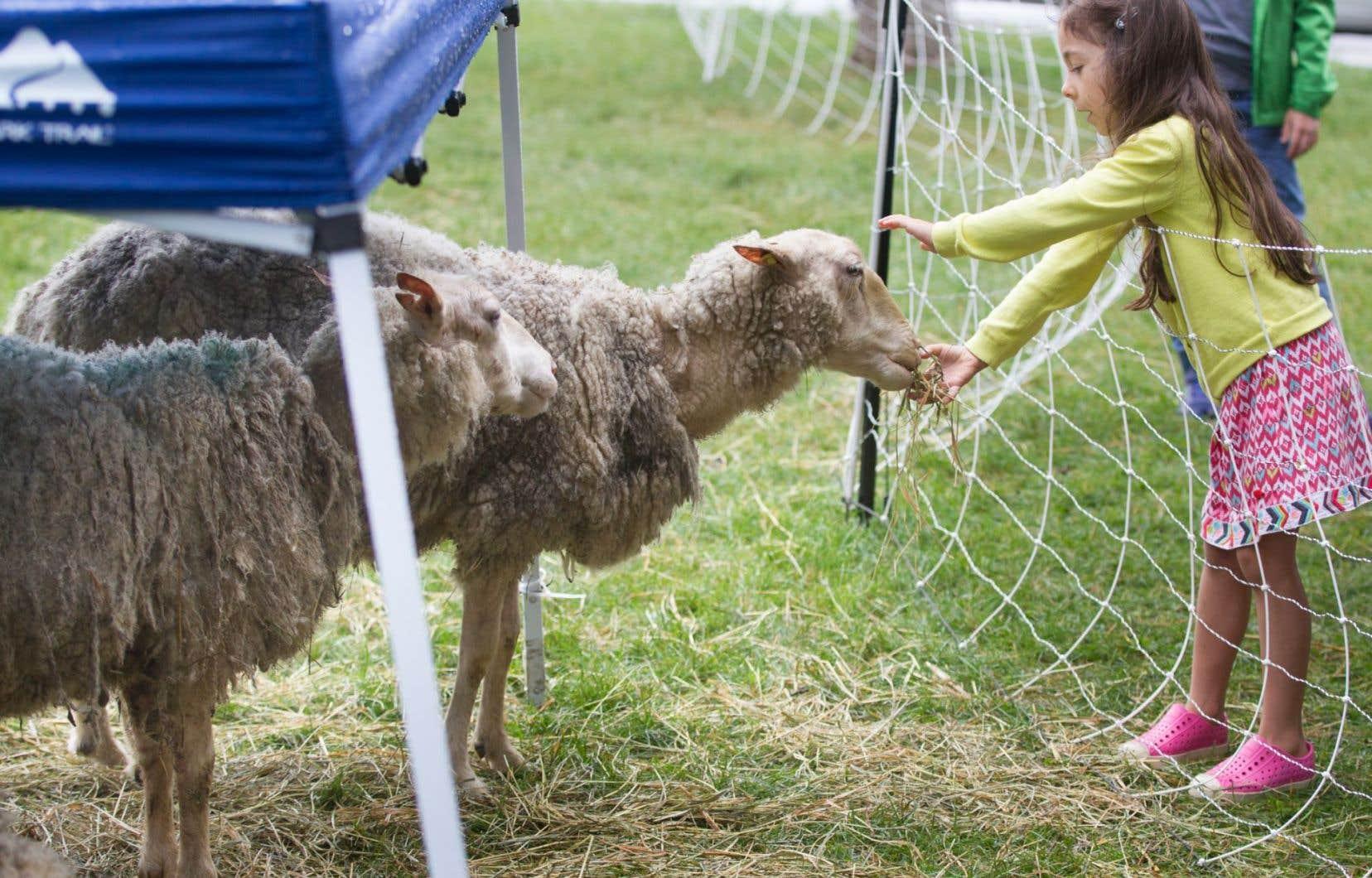 Si des moutons remplacent les tondeuses dans le parc du Pélican à Rosemont, c'est notamment grâce aux 5000 $ versés par 98 citoyens ravis par ce projet d'écopâturage urbain.