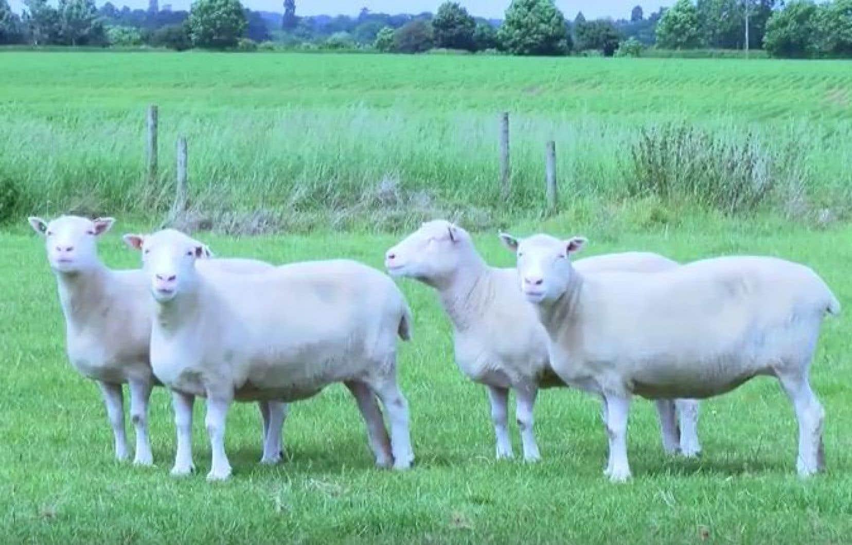 Debbie, Denise, Dianna et Daisy sont les sœurs identiques de Dolly, même si elles sont nées 11ans après elle.