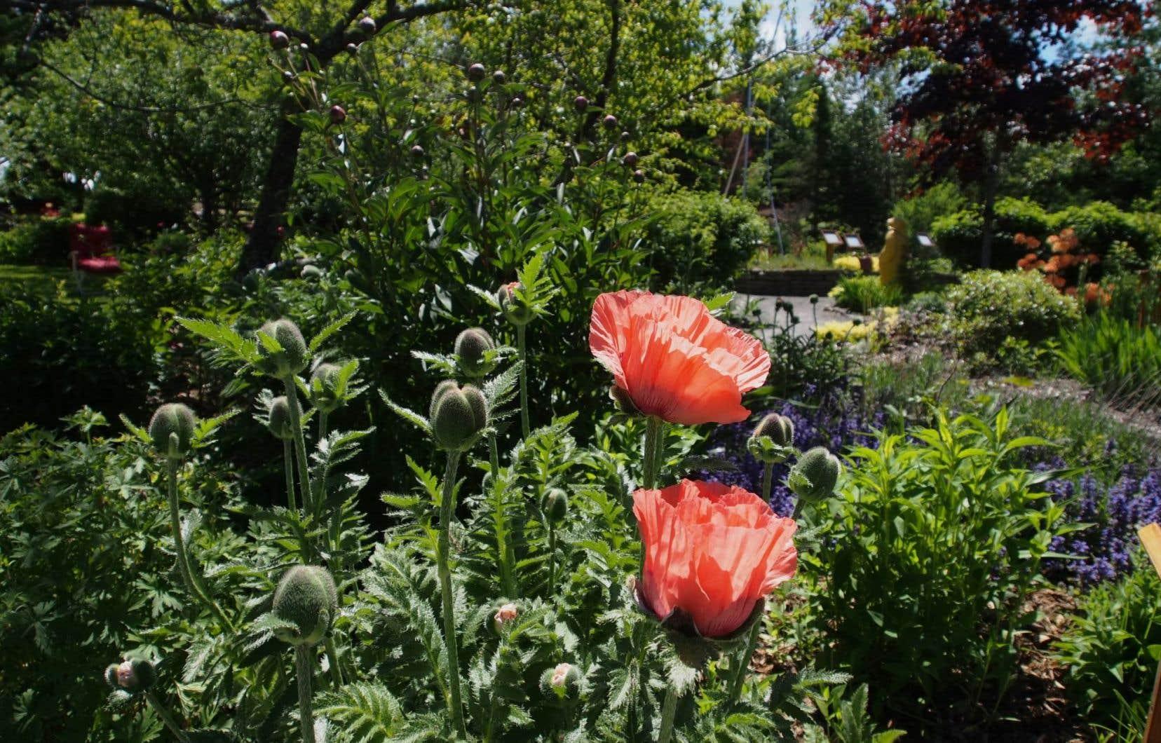 Les Jardins de Doris, à Matane, sont un lieu touristique dont le but est de venir en aide aux jeunes en difficulté.