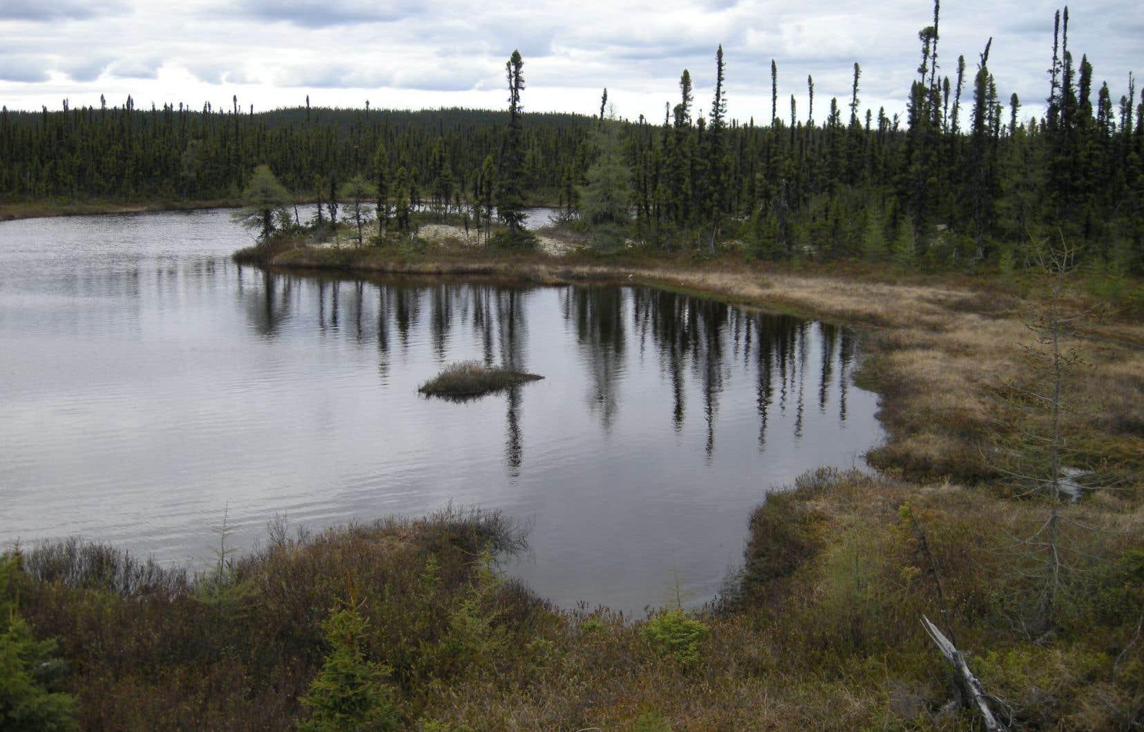 Paysage typique le long de la route 500, entre Labrador City et Happy Valley-Goose Bay, lors d'une journée nuageuse