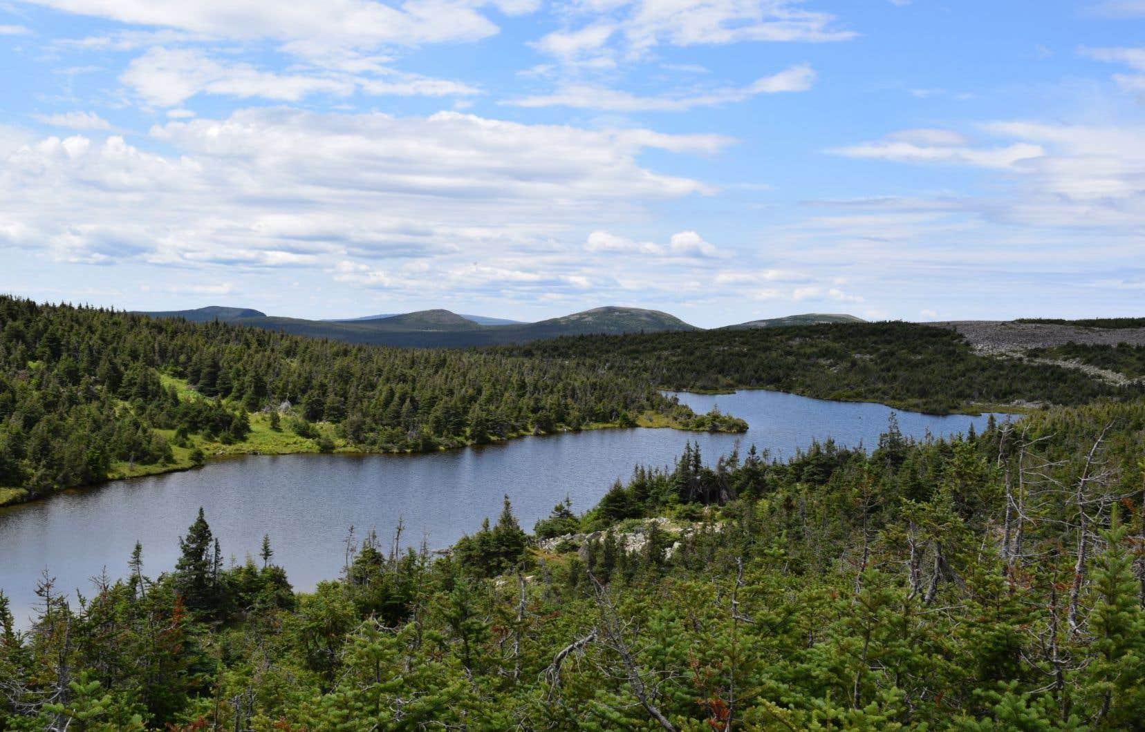 La réserve des Chic-Chocs, située aux abords du parc national de la Gaspésie, est visée par des permis. Sur son site Web, la SEPAQ vante un « lieu de prédilection remarquable pour la faune ».