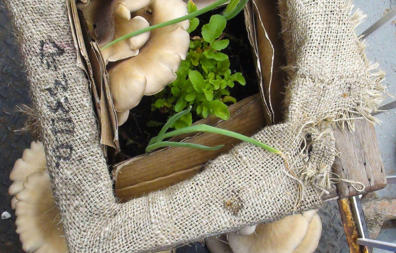 Champignons Maison vend des trousses de culture prêtes à l'emploi pour faire pousser des champignons chez soi, grâce au marc de café.