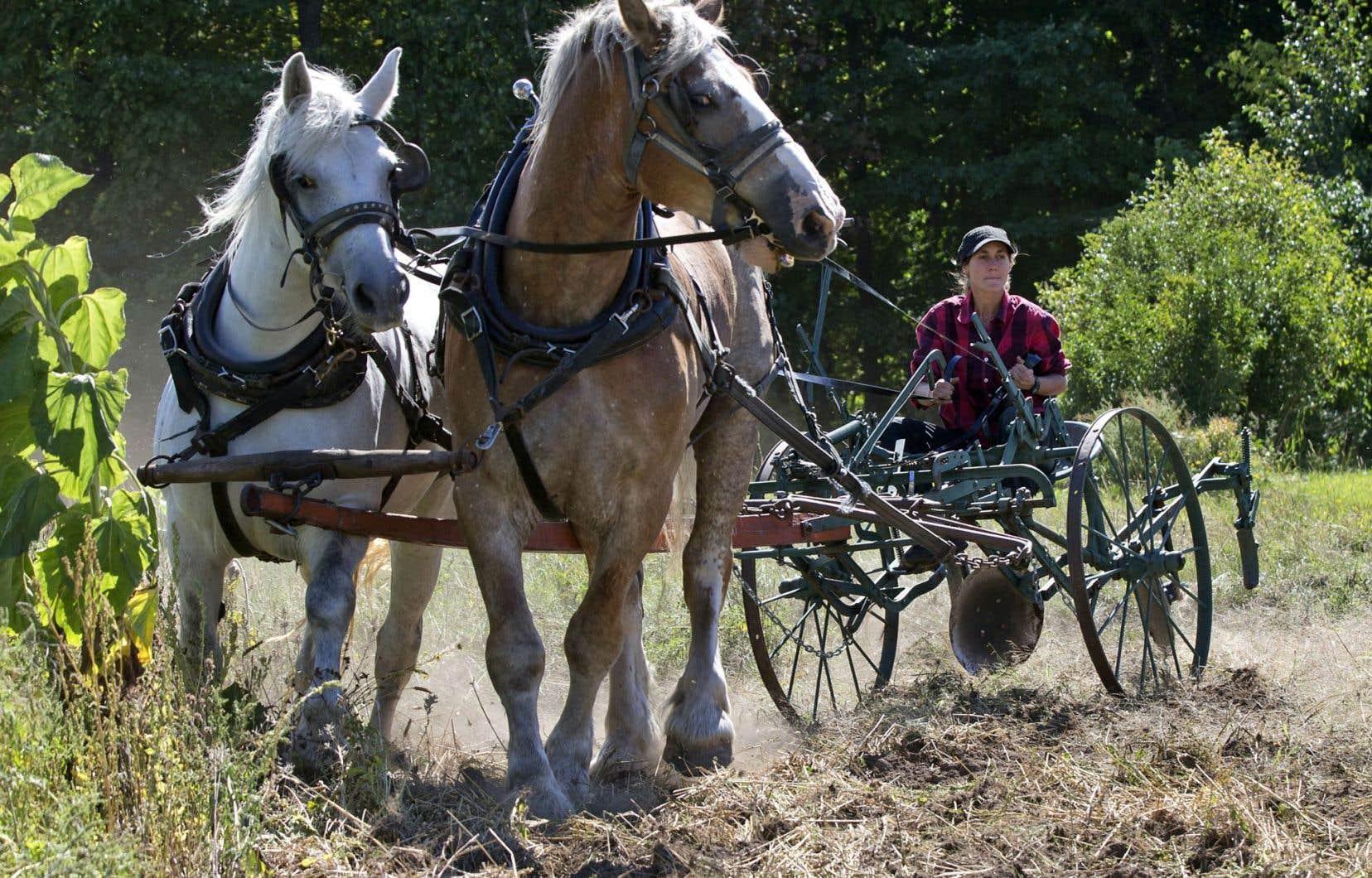 La maraîchère Mylaine Massicotte remue la terre assise sur son cultivateur, en compagnie de Bill et Miss, 3400 livres de muscles et quelques onces d'affection.