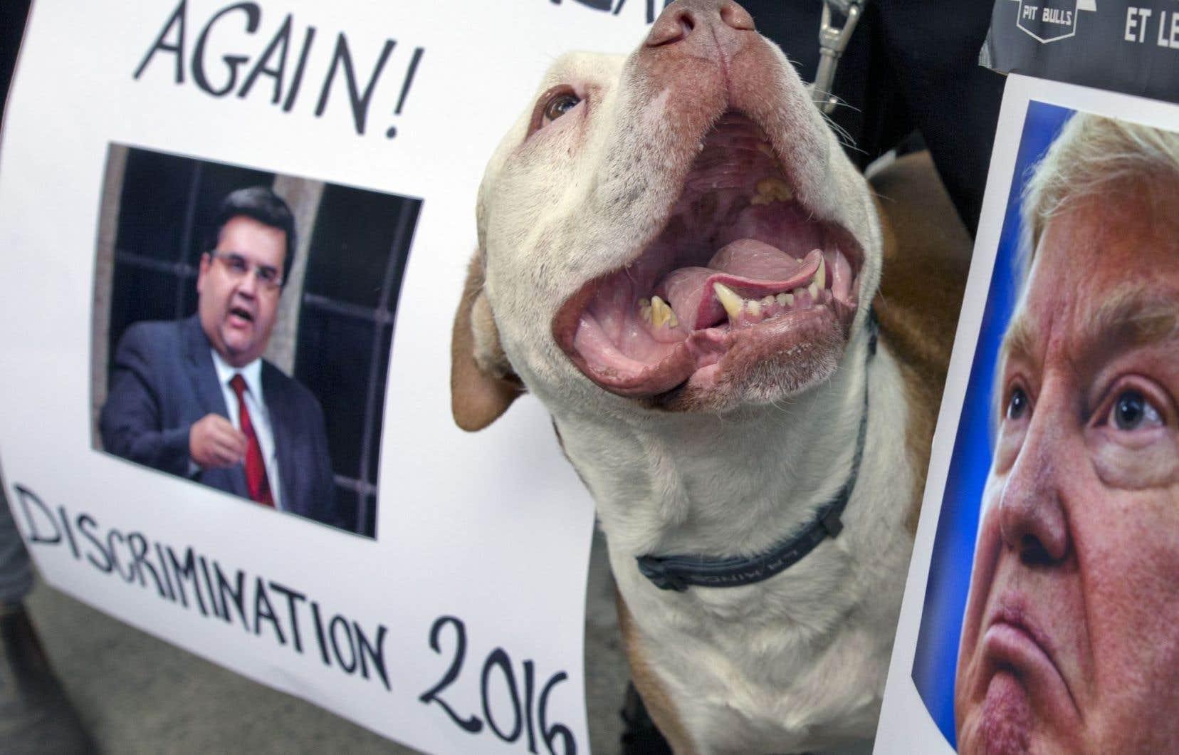 Les opposants à l'interdiction des pitbulls ont trouvé un moyen de se faire entendre.