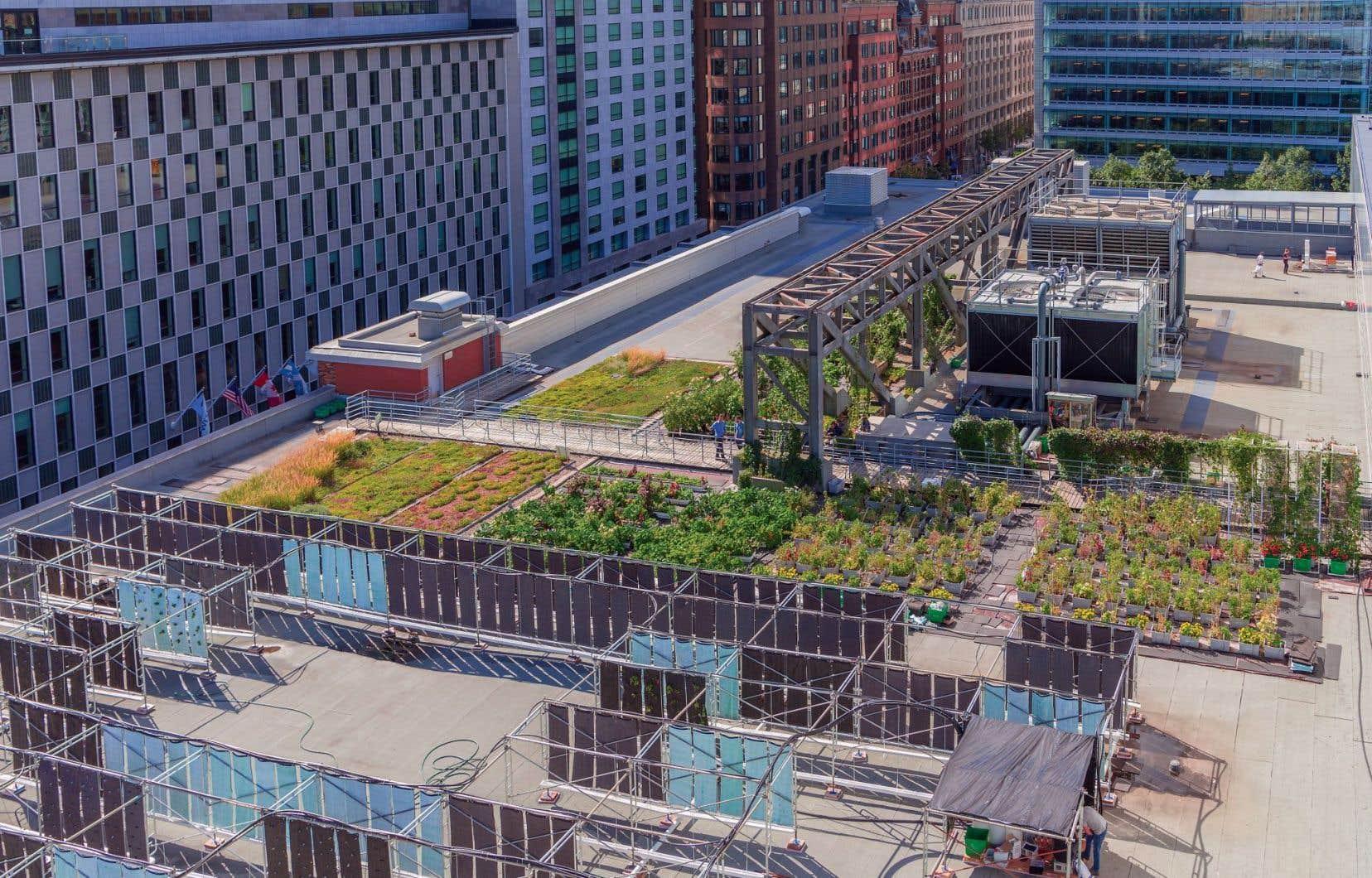 Il devrait bientôt être possible d'aller faire de l'autocueillette sur le toit vert du Palais des congrès de Montréal.