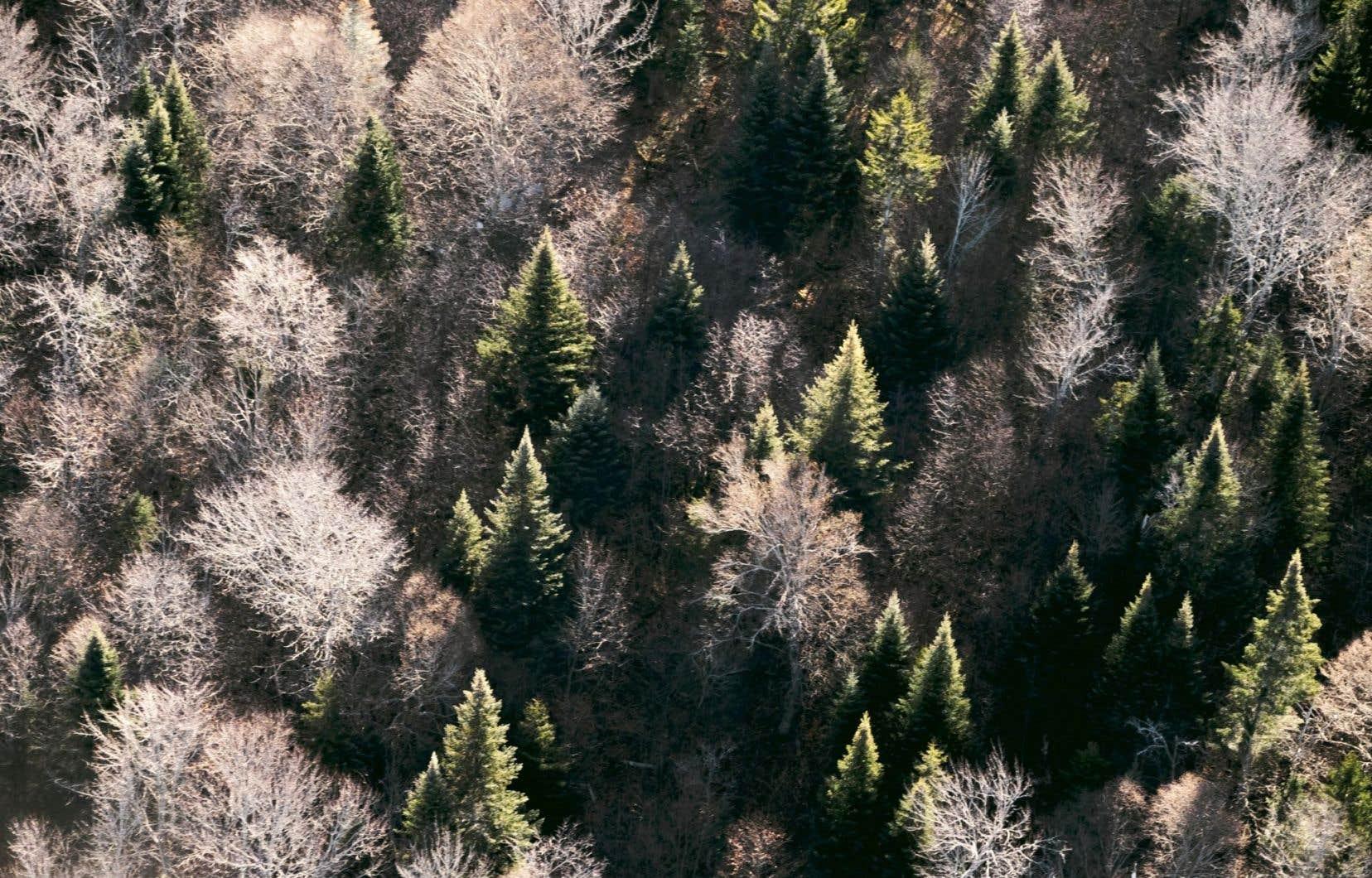 Les chercheurs de 90 institutions ont compilé et analysé les données d'inventaires forestiers de 780000 parcelles de forêt réparties dans 44 pays et 13 régions écologiques différentes.