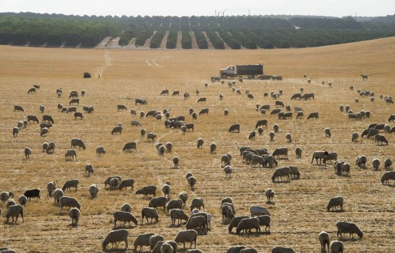 Les bouleversements du climat provoquent déjà une augmentation importante des événements climatiques extrêmes, dont les sécheresses comme celle vécue en Californie.