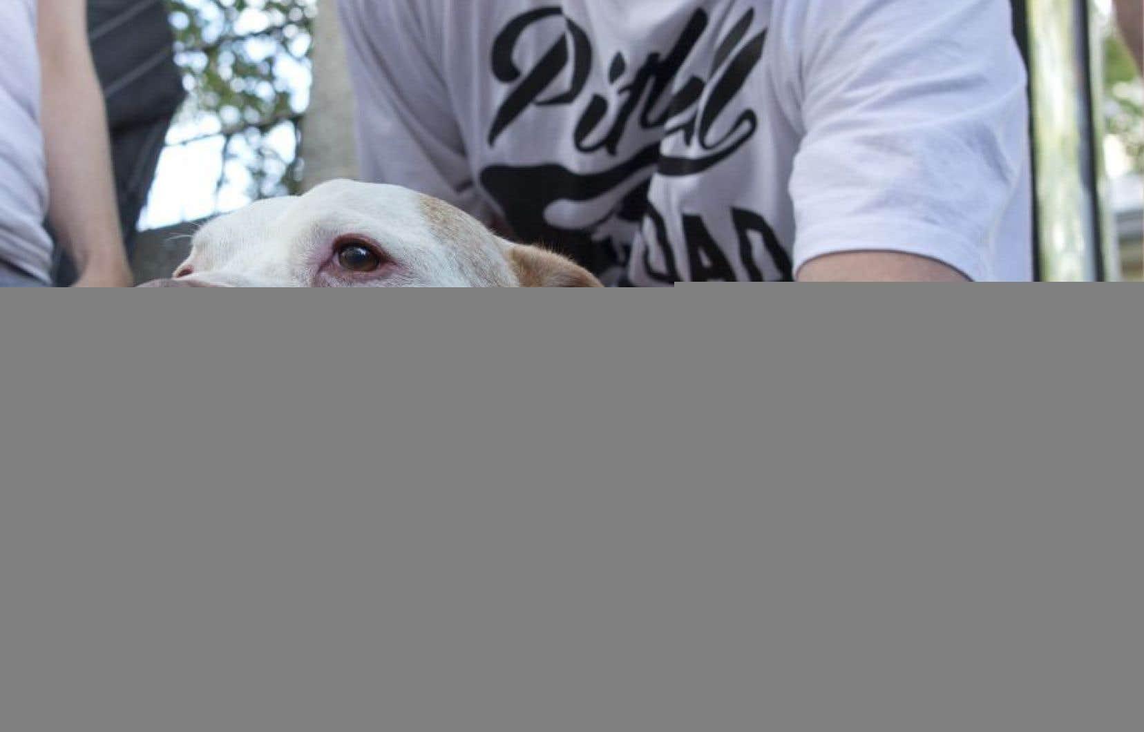 Selon le maire de Montréal, Denis Coderre, il faut agir en amont pour protéger les citoyens contre les chiens dangereux.