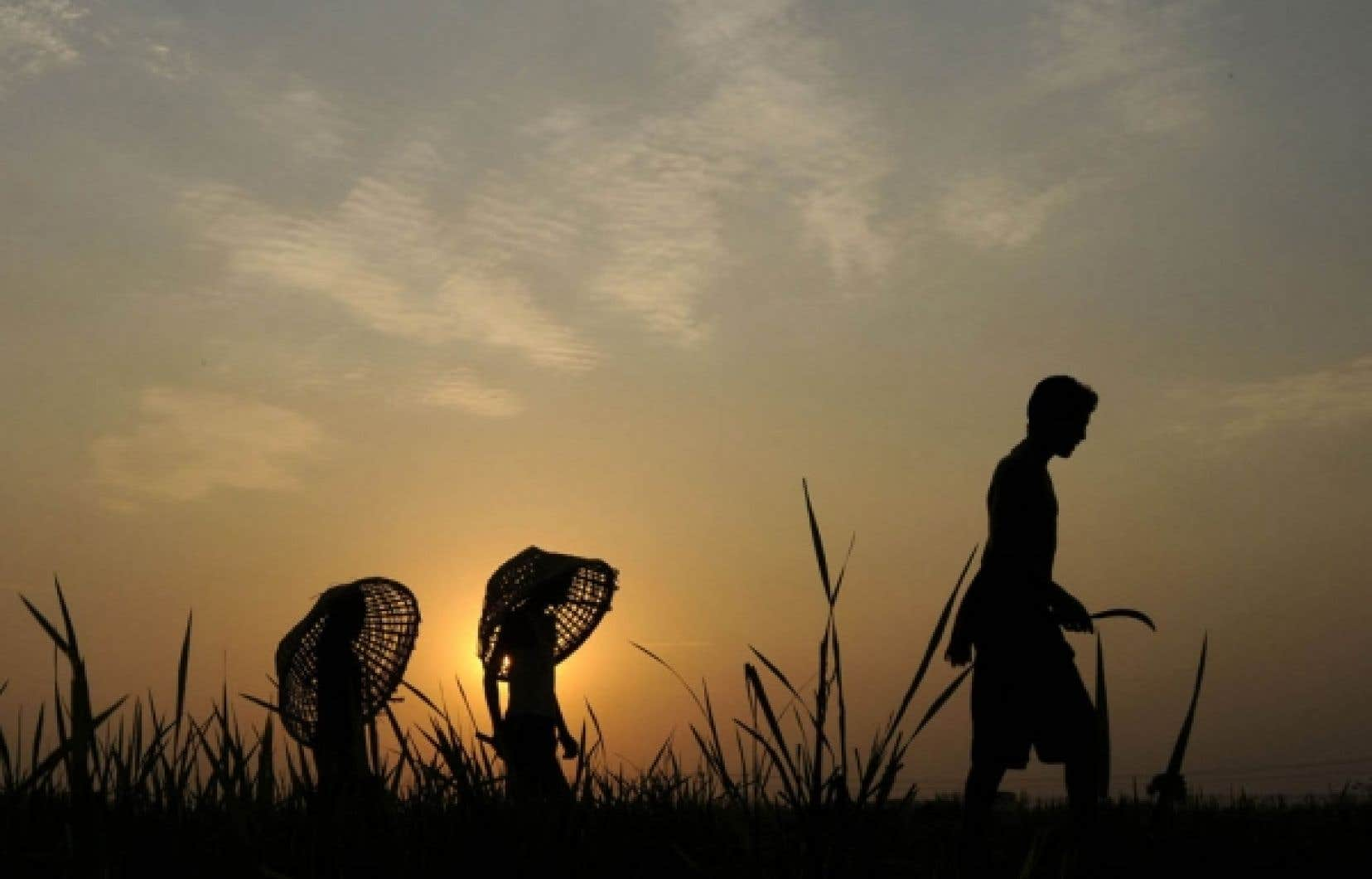 La silhouette de fermiers indiens est découpée par le soleil couchant. Le pays a connu dans neuf grands États de l'Union une très mauvaise mousson, et les récoltes en ont beaucoup souffert.