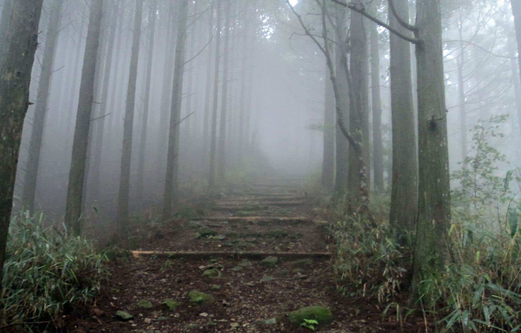 Un sentier de pèlerinage du Kumano Kodo