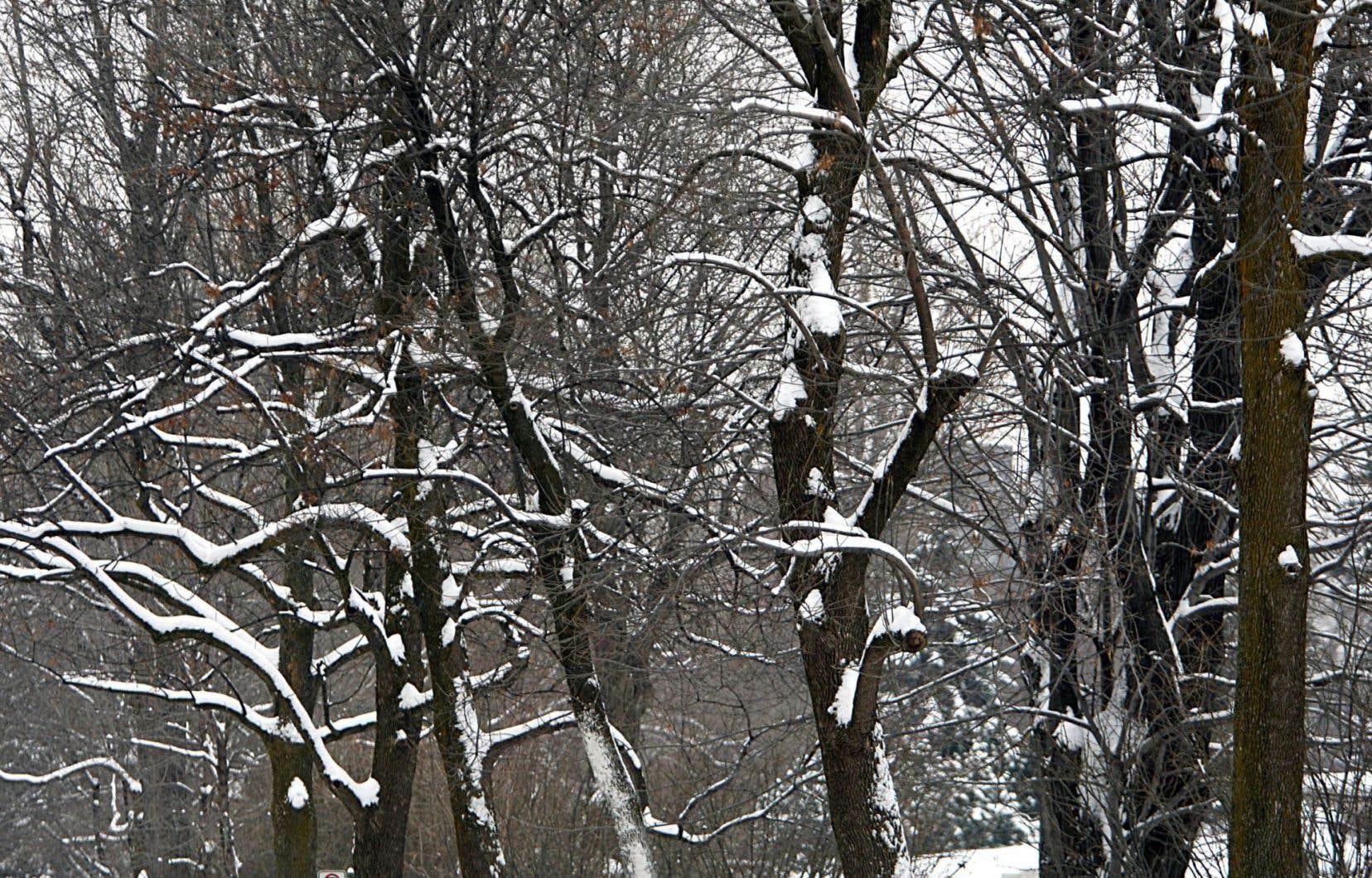 «En novembre, une feuille d'un jaune éclatant tenait encore dans un arbre; le mouvement de celle-ci beau comme un accompagnement musical», écrit Olivier Bourque.