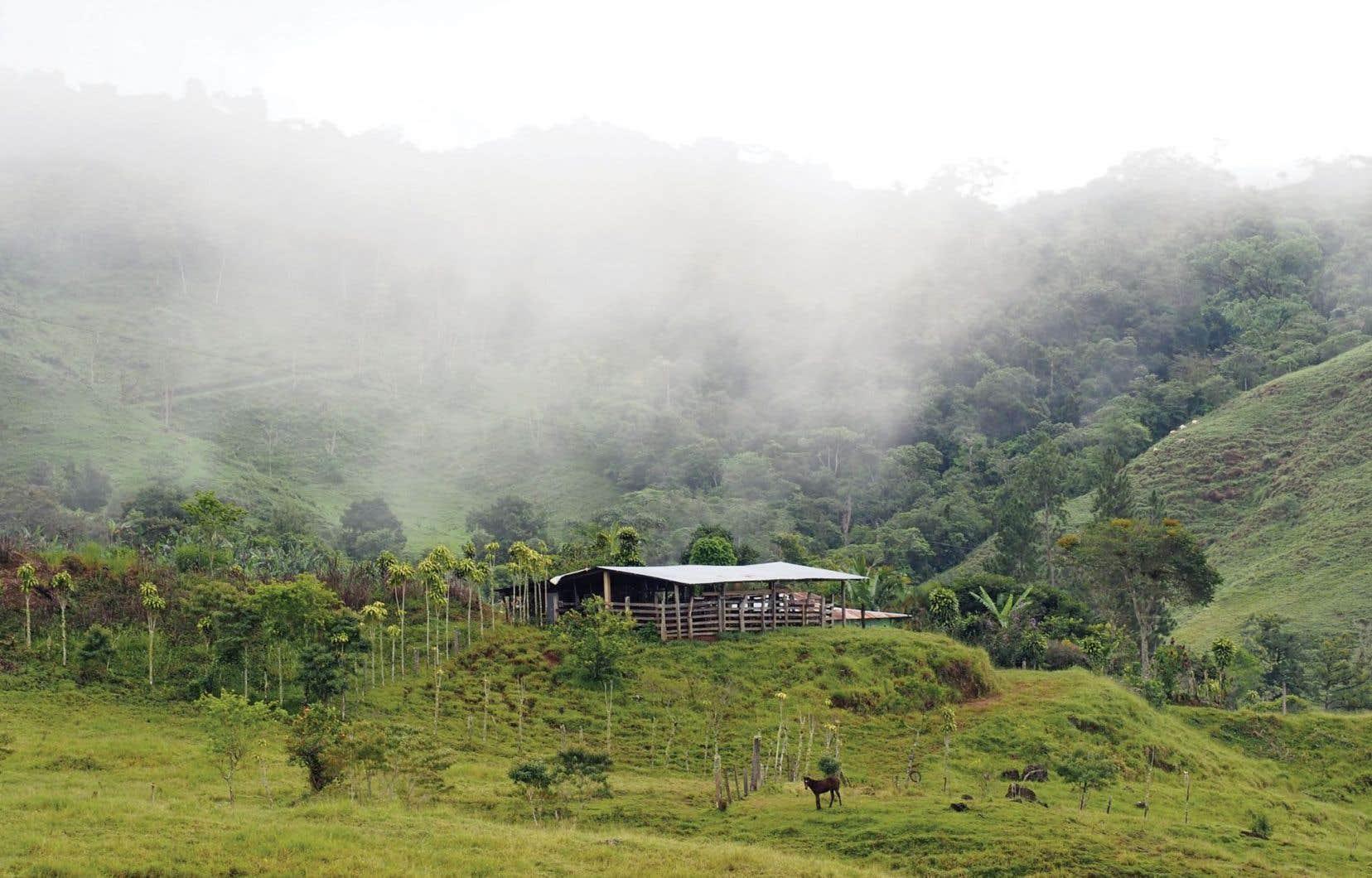 Avant même d'arriver à la station biologique d'Altamira, porte d'entrée dans le parc national La Amistad, les panoramas sont déjà enveloppés de nuages.