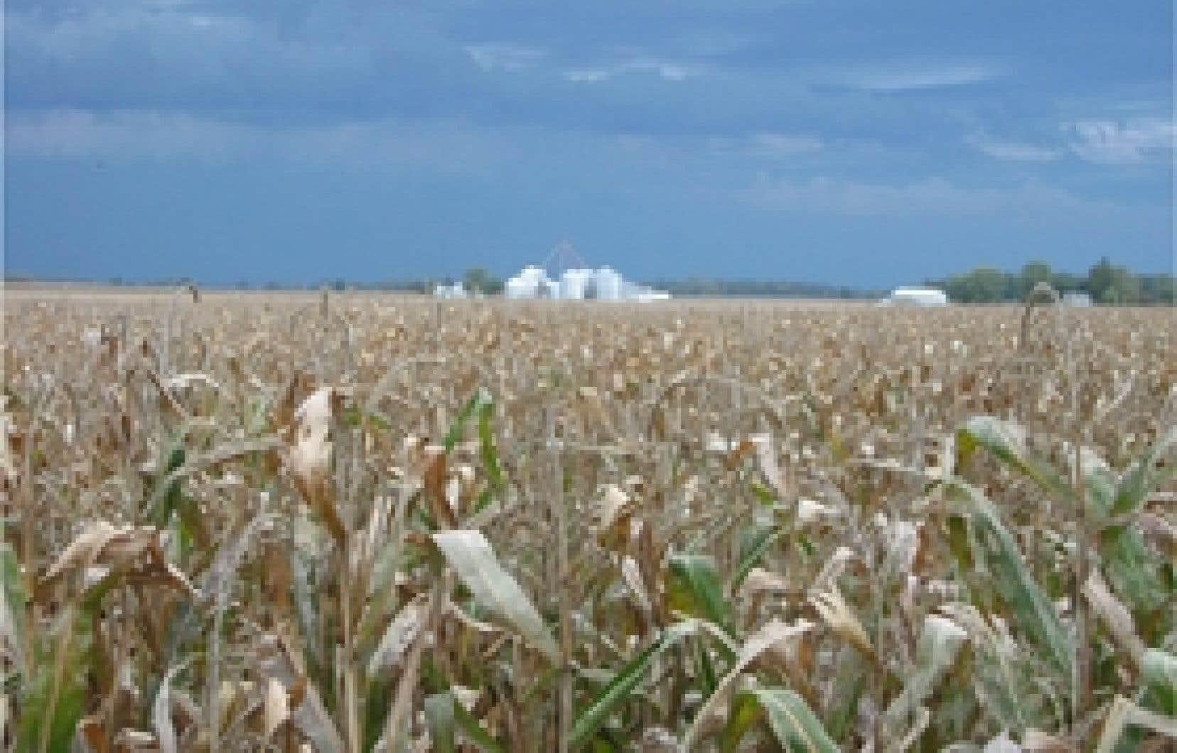 Le canola, certes, mais aussi le maïs et d'autres denrées, sont produits à partie d'OGM partout dans le monde.