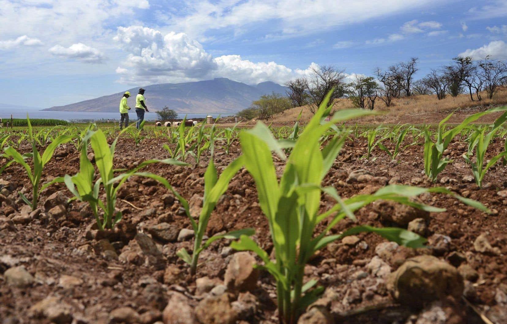 Il est temps d'amorcer une transition vers «une production alimentaire et agricole plus saine», concluent les auteurs du rapport.