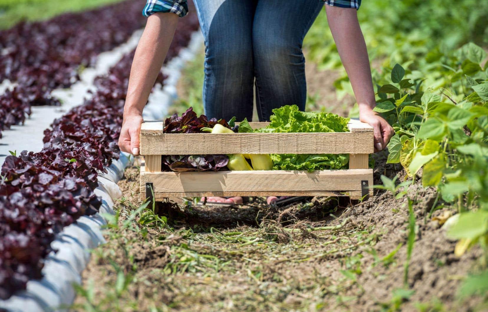 «Le marché est là, grossit et, si les producteurs d'ici ne le prennent pas, ce sont les producteurs étrangers qui vont le prendre», assure Daniel Dubé, président de la Filière biologique du Québec.