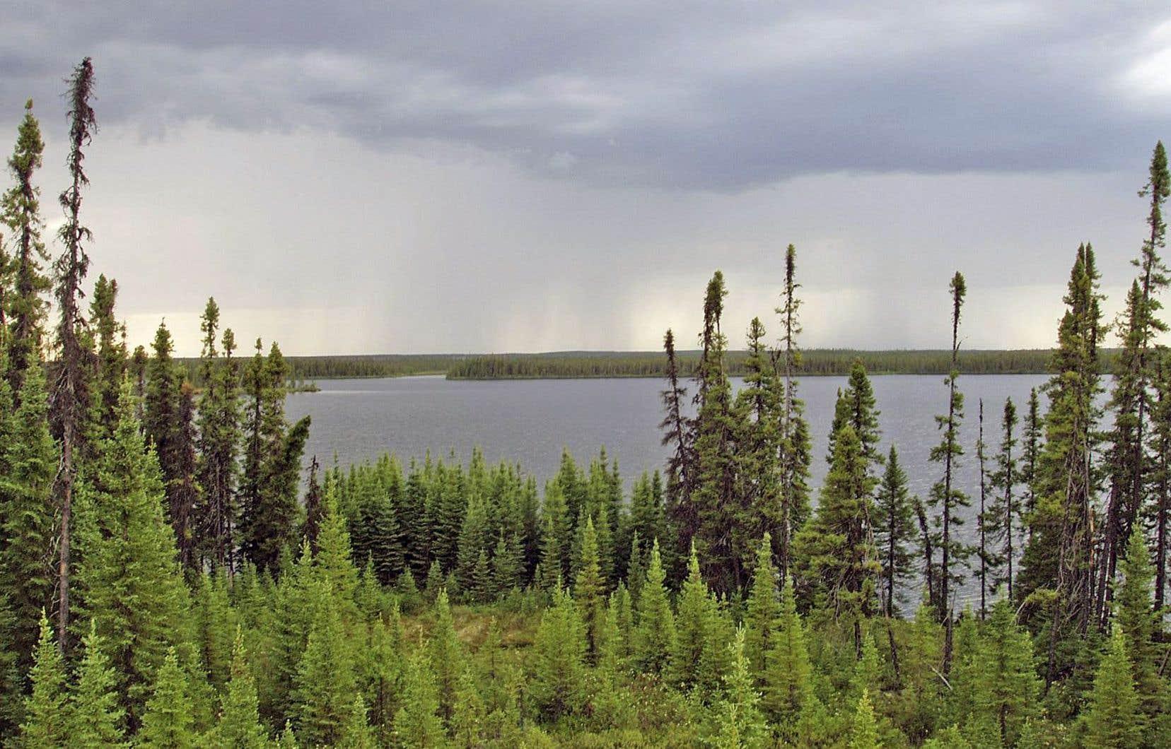 Le Canada possède en effet un tiers des 16 millions de kilomètres carrés des forêts du Nord, abritant 20 000 espèces végétales et animales et filtrant 80% de l'eau douce courante au monde.