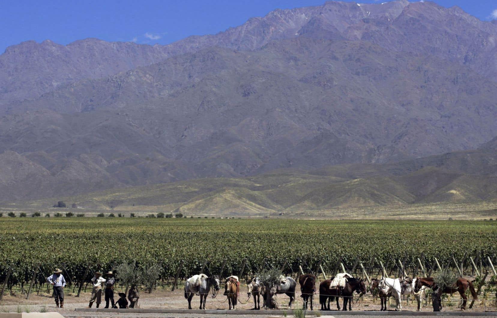 Vignoble de Mendoza, en Argentine