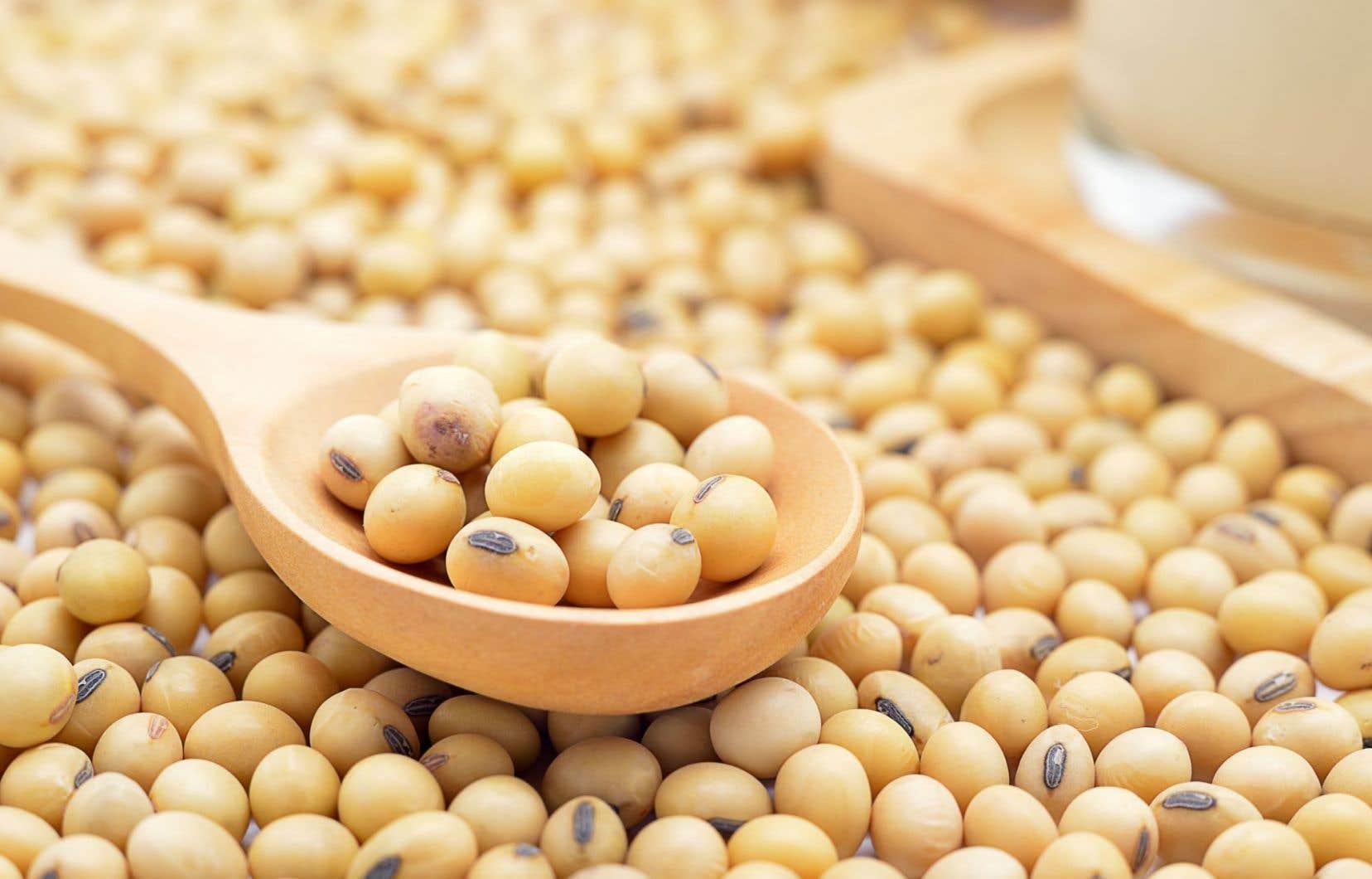 Lorsque les fèves blanches sont bouillies, leurs protéines se dégradent très rapidement dans le système digestif, selon les tests.