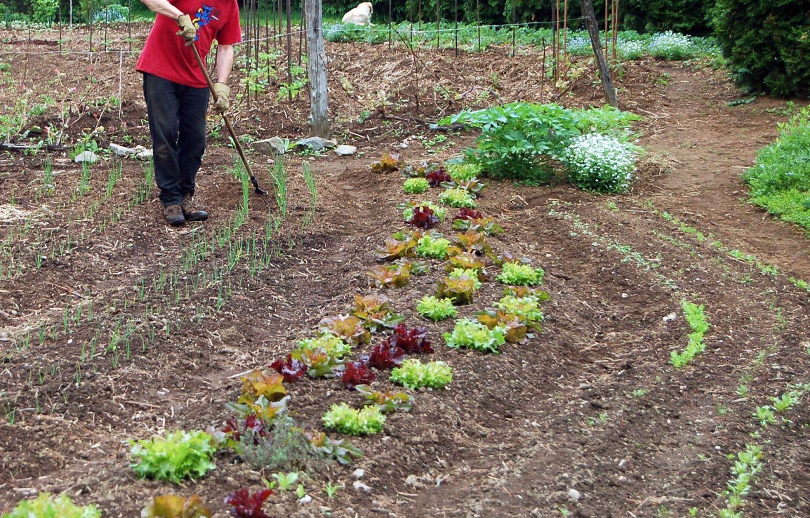 Yves Gagnon au travail dans les Jardins du Grand-Portage, à Saint-Didace, créés avec sa compagne Diane Mackay.